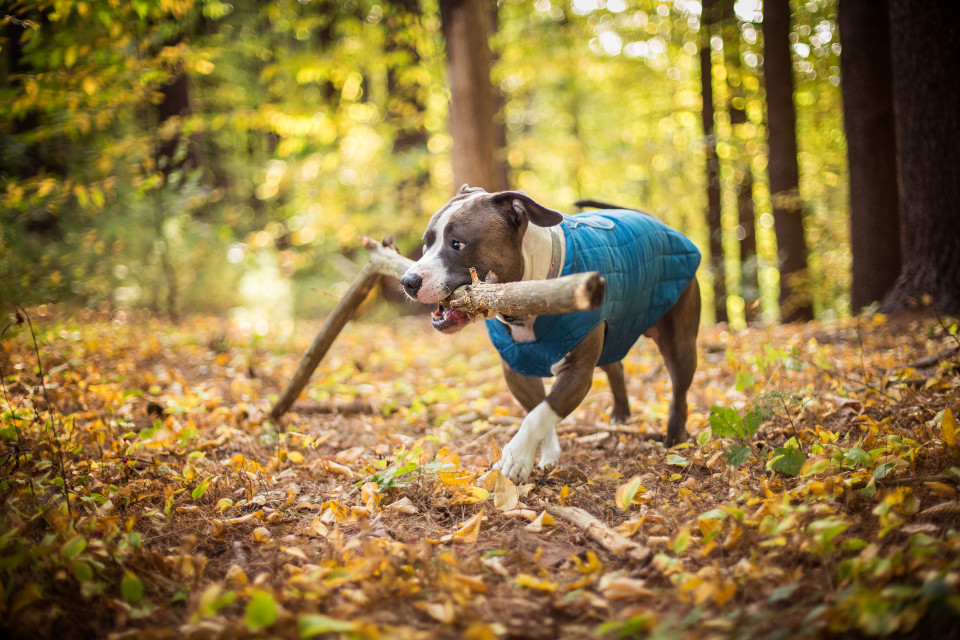 Get your dog ready for fall weather with these must-have accessories