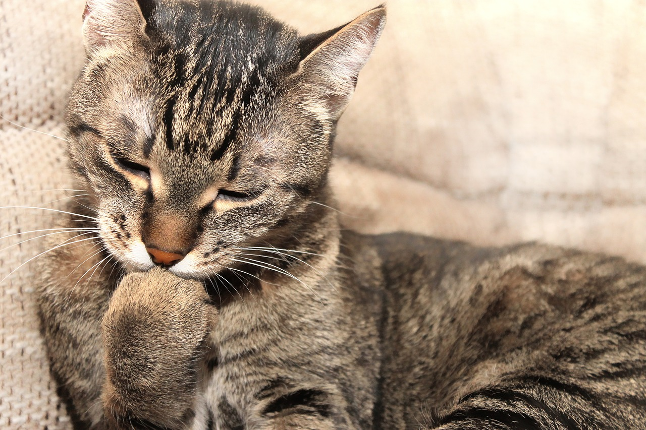 My funny feline — rational explanations for why your cat acts so weird