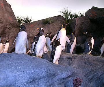StLouis Zoo